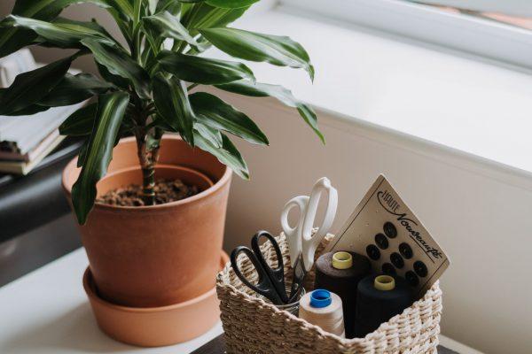 Planten voor kantoor: zoveel voordelen